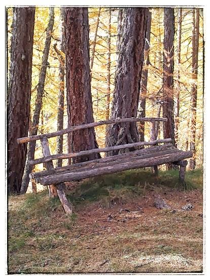 bench_woods